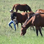 Tips for polo horses care & training POLO in BsAs