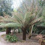 An enormous fern