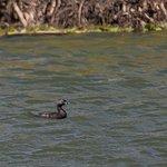 Photo of Bubali Bird Sanctuary