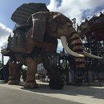 L'éléphant en promenade