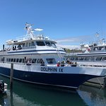 Photo de Dolphin Fleet Whale Watch