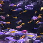 African cichlids...a wide variety of aquariums