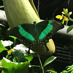 Photo de Victoria Butterfly Gardens