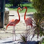 Ardastra Gardens, Zoo and Conservation Center Foto