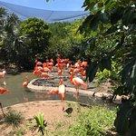 Noisy flamingo exhibit (they fight)