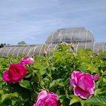 Photo de Royal Botanic Gardens, Kew