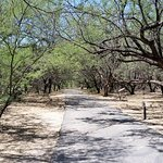 Cool walk through the mesquite trees where the orchards used to be.