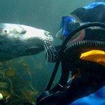 Puerto Madryn Shore Excursion: Scuba Dive with Sea Lions