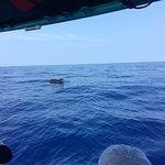 Photo de Sea Quest Snorkel Tours