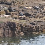 Seals relaxing on the rocks