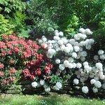 صورة فوتوغرافية لـ حديقة هايد بارك