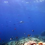Bright Shark Diving Center照片