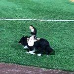 Frawley Stadium Cowboy Monkey Rodep