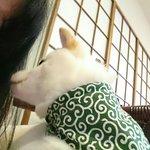 Photo of Kurashiki Mameshiba Cafe
