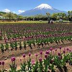 Photo of Yamanakako Hananomiyako Park