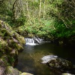 The idyllic bucolic scenery in the woods above Dolgoch Falls