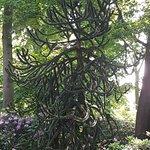 Bilde fra Bunter Garten