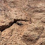 صورة فوتوغرافية لـ Camelback Mountain