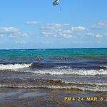 Algas en playa del carmen.