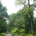 un forêt dense