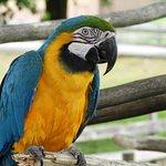 Bilde fra Metro Richmond Zoo