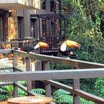 Tucanos na varanda