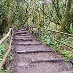 Procházku v pralese zvládnou i fyzicky nepříliš zdatní návštěvníci