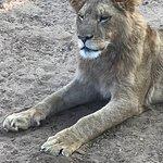 Melbourne Zoo Φωτογραφία