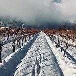 Winter in the BTL Vineyard