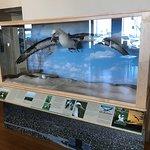 Leysan Albatross