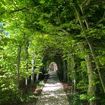 Natural colonnade in the Palace Gardens