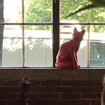 صورة فوتوغرافية لـ The Red Cat