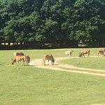 Photo of Parc Zoologique et Chateau de Thoiry