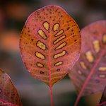 Foto de National Rhododendron Gardens