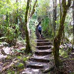 Starting the 'Dome Forest Walkway' climb