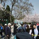 Photo of Qingdao Zhongshan Park