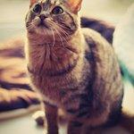 Эдит: ласковая и милая кошка будет счастлива играть!