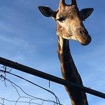 Safari Park Φωτογραφία