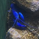 Cairns Aquarium Φωτογραφία