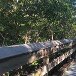 Photo de Corkscrew Swamp Sanctuary