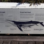 Info panel about whales