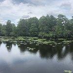 Photo of Lettuce Lake Regional Park