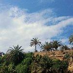 صورة فوتوغرافية لـ Alcazar Jerez de la Frontera