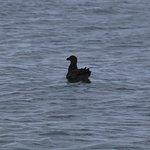 A bird on the ocean