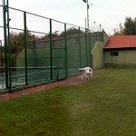 Cancha tenis frontón, aro basket