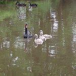 Bild från Swan Lake Iris Gardens
