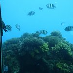 More from the underwater observitory