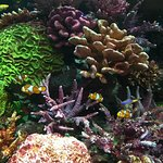 Photo of SEA LIFE Bangkok Ocean World
