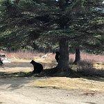 Baby bear climbing up the tree