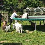 Pennybridge Farm Alpacas Photo